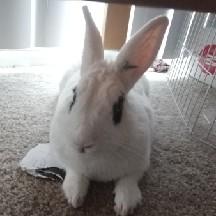 Darth Bunny
