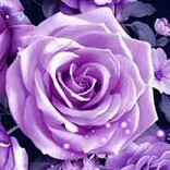 PurpleViolet