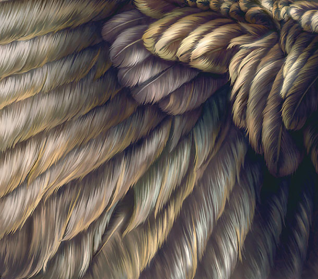 204Feathers