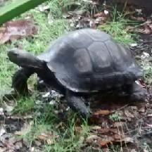 Turtlebitch12