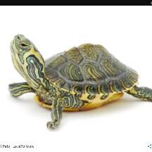 turtle lover jen47