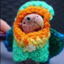 Featherless Parrot