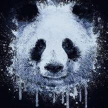 Panda Lover 16