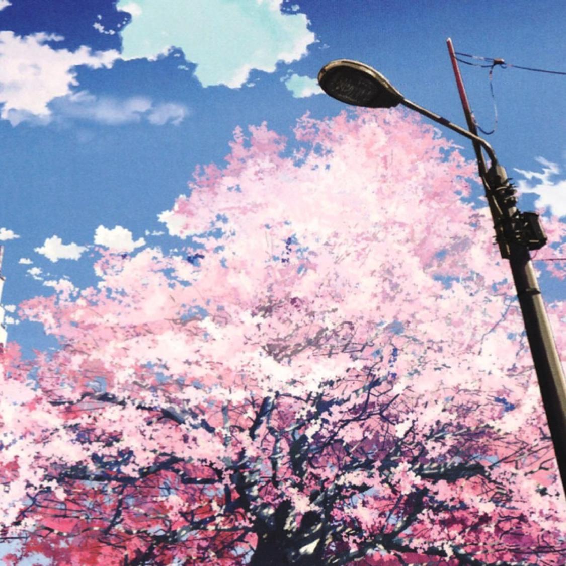 BlossomAsCherry