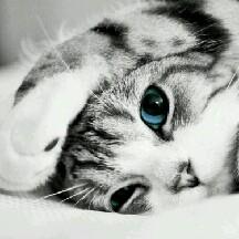 imah kitten