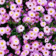 flowered_