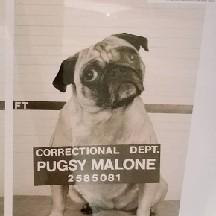Pugs Malone